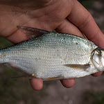 20150822_Fishing_Pyatygory_030.jpg
