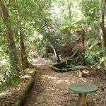 Old Picnic area at base of Cockle Creek lookout track (119884)
