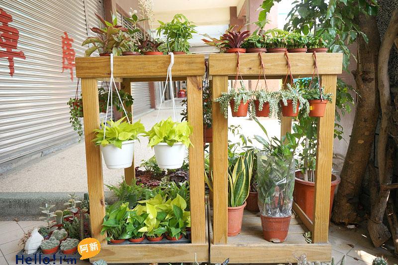 台南盆栽店,日光夏蘭植物工房-6