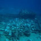 """""""Toilet wreck"""" at Yolanda Reef"""