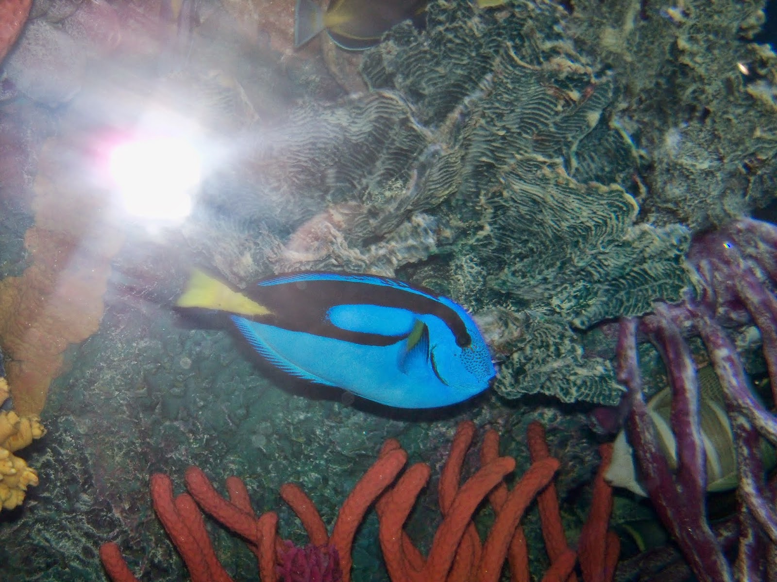 Downtown Aquarium - 116_3929.JPG