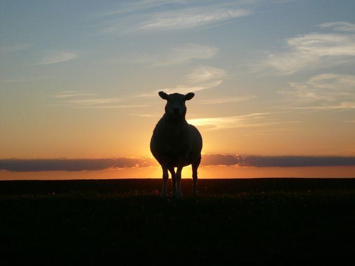 [reve-islam-mouton%255B2%255D.jpg]
