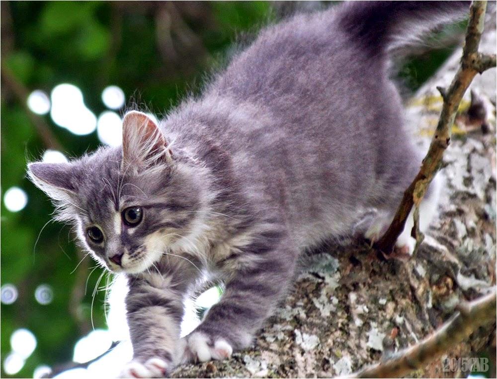 Testclod chaton gris sur les branches d 39 un arbre - Enlever les puces sur un chaton ...
