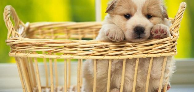 فوائد غير متوقعة ومفاجئة لامتلاك حيوانات أليفة في حياتك
