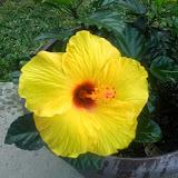 Gardening 2014 - 0411191516.jpg