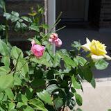 Gardening 2010, Part Three - 101_4516.JPG