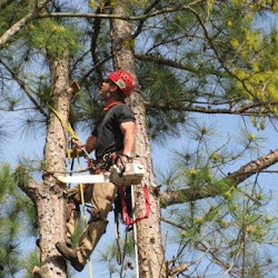 American Tree Masters's profile photo