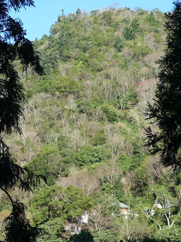 TAIWAN Chia yi, Taichung et quelque part ? au  au sud de Taipei - P1000292.JPG