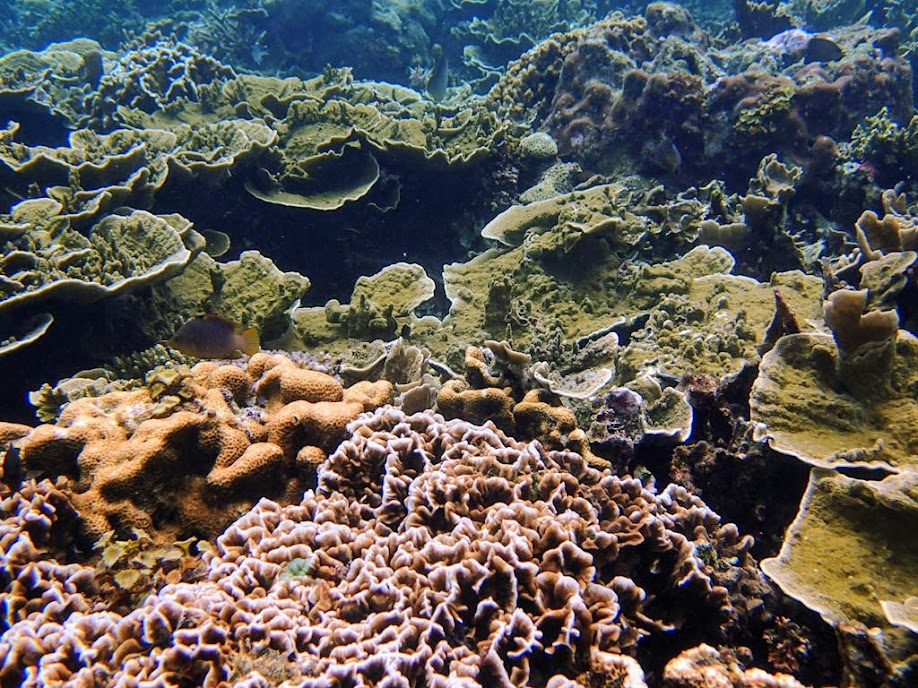 Reef outside Small Lagoon, Miniloc Island, Palawan, Philippines.