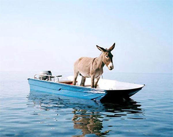 donkey flotilla