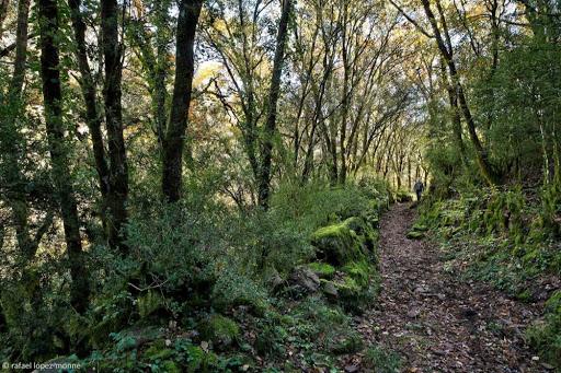 Camí ral de Peramea a Ballestiu. Antic camí de ferradura. Pirineus. Baix Pallars, Pallars Sobirà, Lleida