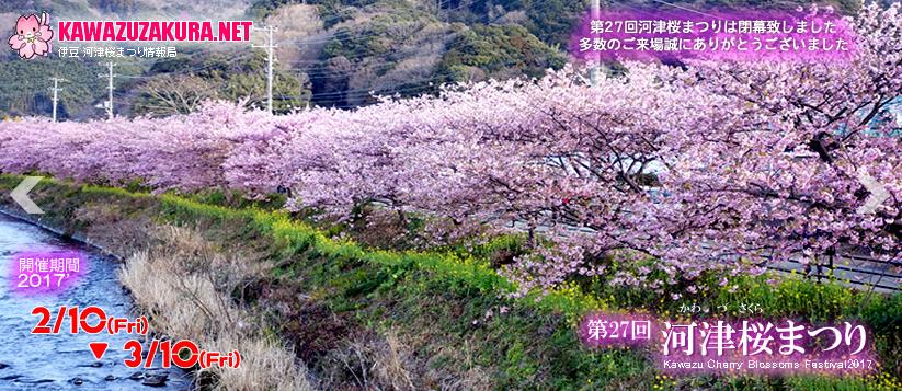 kawaduzakura.png