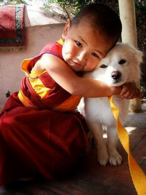 Human Animal Love Images