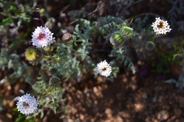flowers along the trail