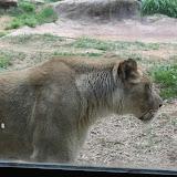 Zoo Snooze 2015 - IMG_7196.JPG