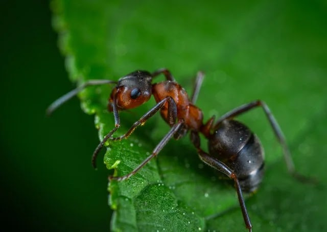 Ants are common house pests