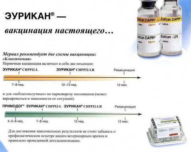 График прививок для йоркширских терьеров 200avm1