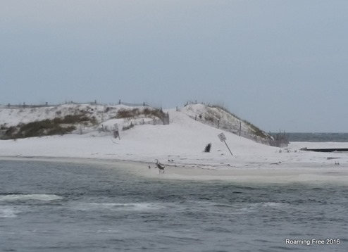 Sand dune separating the jetty from the gulf