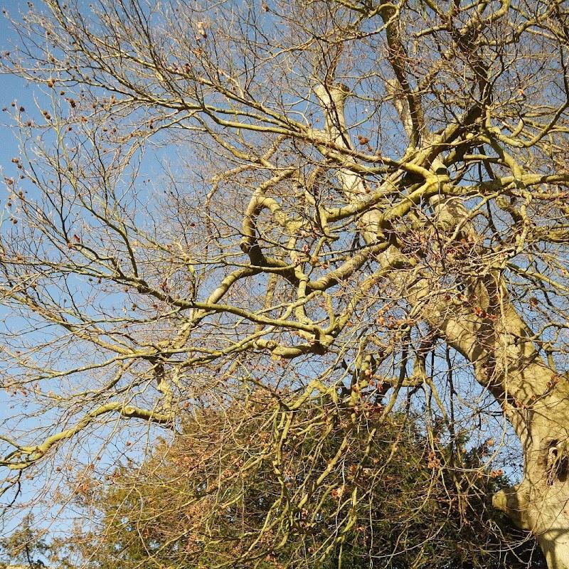 Stowe_Trees_10.JPG