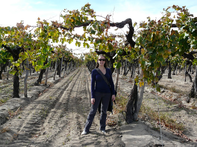 Either the vines here are way taller or Jen has shrunk considerably since we left--I see her everyday so I probably wouldn't have noticed.  You decide.