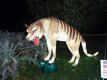 2018.12.03-049 Thylacine