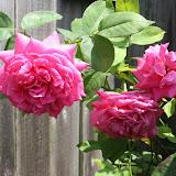 Gardening 2012 - IMG_3815.JPG
