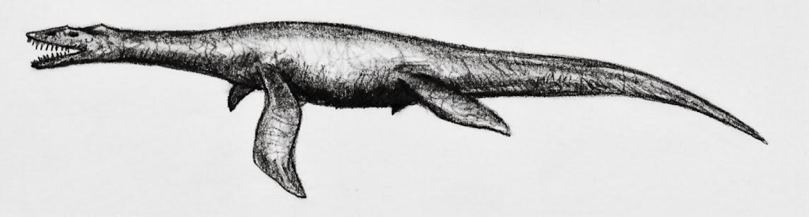 eure dinosaurier-Bilder - Seite 2 Simosaurus