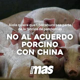 Cerdos China Chacabuco