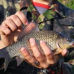 20140510_Fishing_Stara_Moshchanytsia_014.jpg