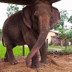 elephantcamp1.jpg