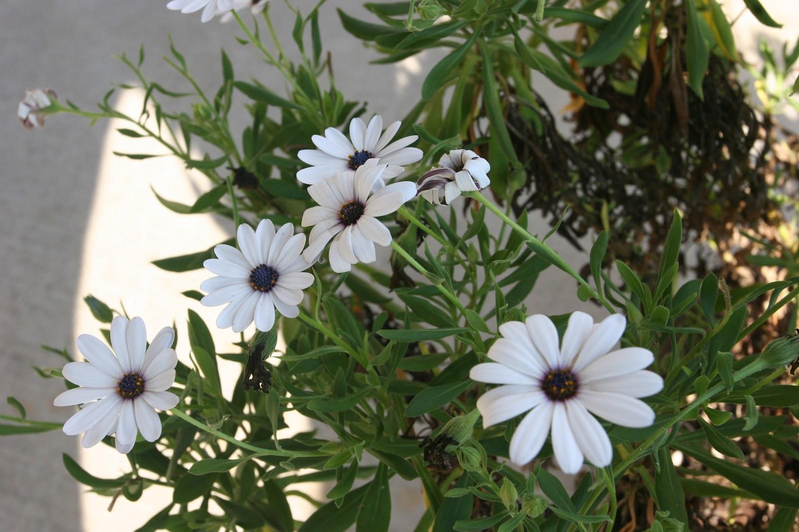 Gardening 2012 - IMG_3217.JPG