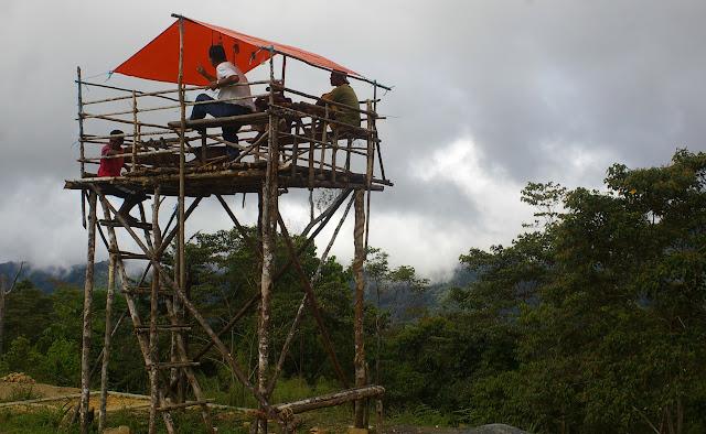 Poste de guet pour les Ornithoptères à Meni (Arfak, août 2007). Photo : Jean-Marc Gayman
