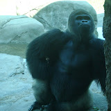 Pittsburgh Zoo Revisited - DSC05182.JPG