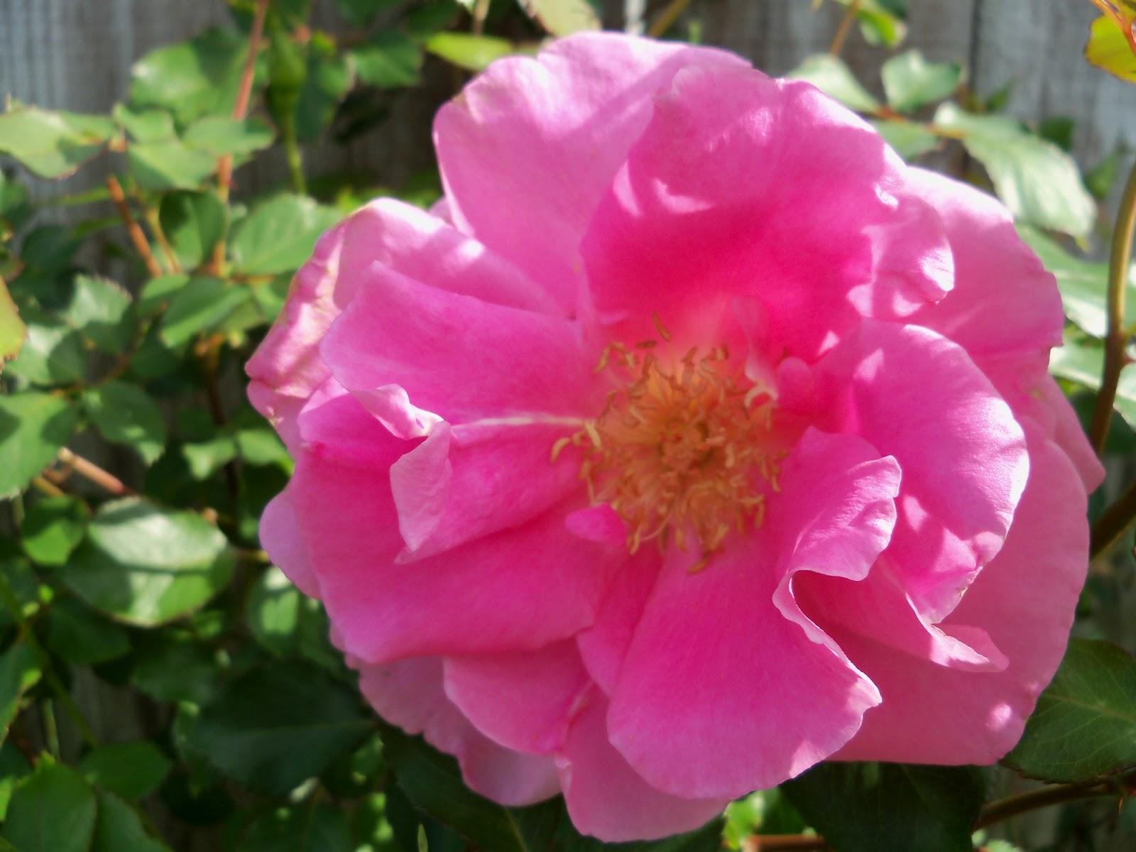 Gardening 2011 - 100_7094.JPG