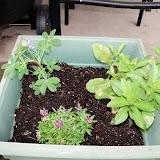 Gardening 2012 - 115_1404.JPG