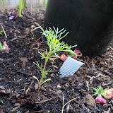 Gardening 2010, Part Two - 101_1915.JPG