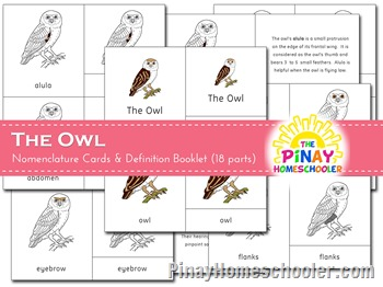 The Owl Nomenclature Cards