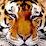 Roman CAT's profile photo