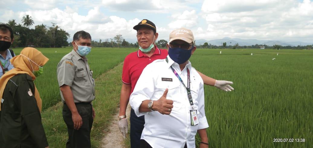 LHD Staf Khusus Mentan Ajak Petani dan Penyuluh Tetap Produktif