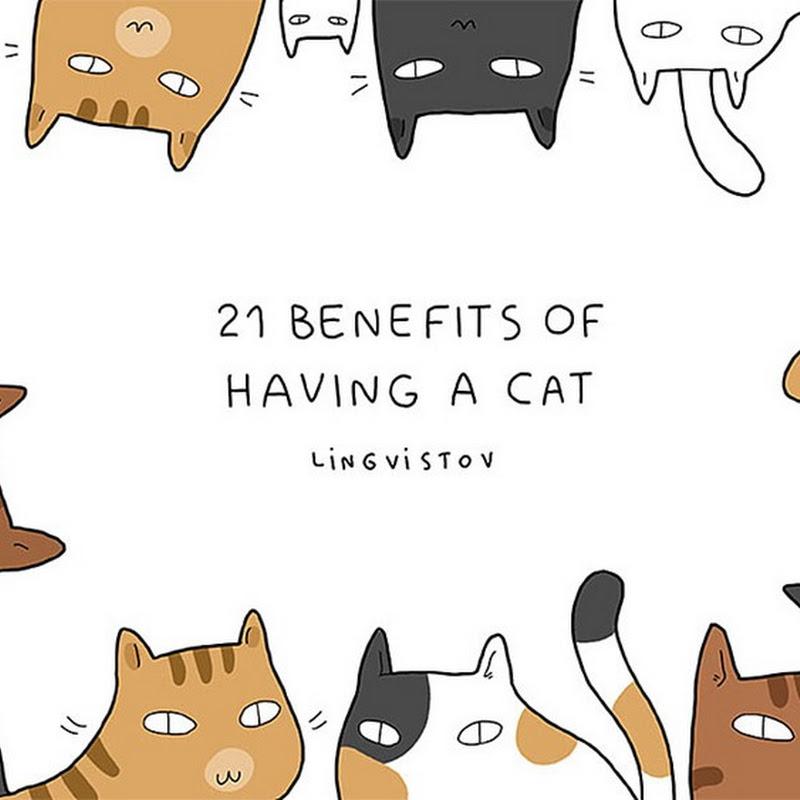 21 Alasan Kenapa Bagusnya Membela Seekor Kucing.