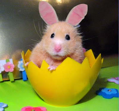 hamster-bunny.jpg