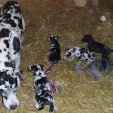 Gretta & Cobalt Blues 3/24/12 litter - SAM_3359.JPG