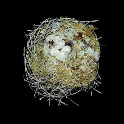 Birds Nests Photography by Sharon Beals Seen On www.coolpicturegallery.us