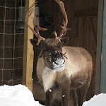 2008_12_25_Christmas_Grouse_Mountain