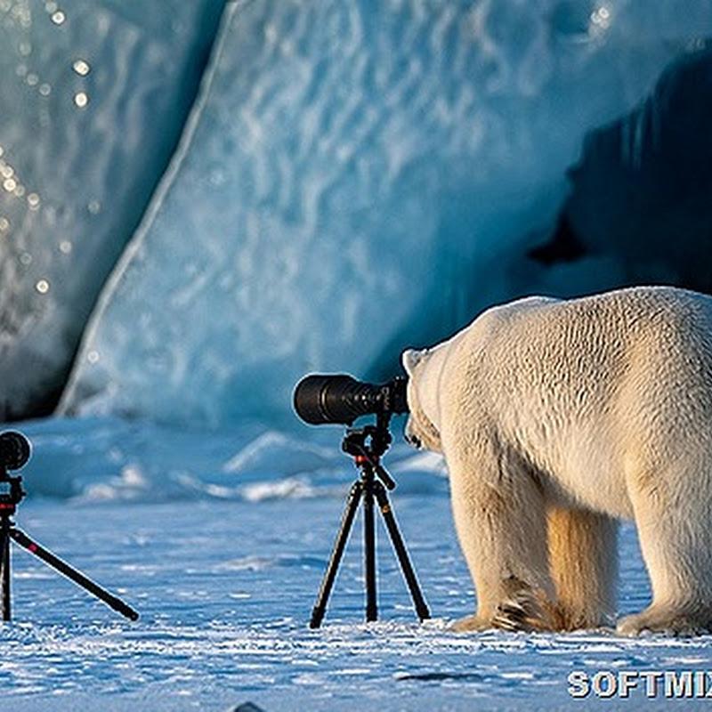 Веселые фотографии животных с конкурса Comedy Wildlife Photography Awards 2018