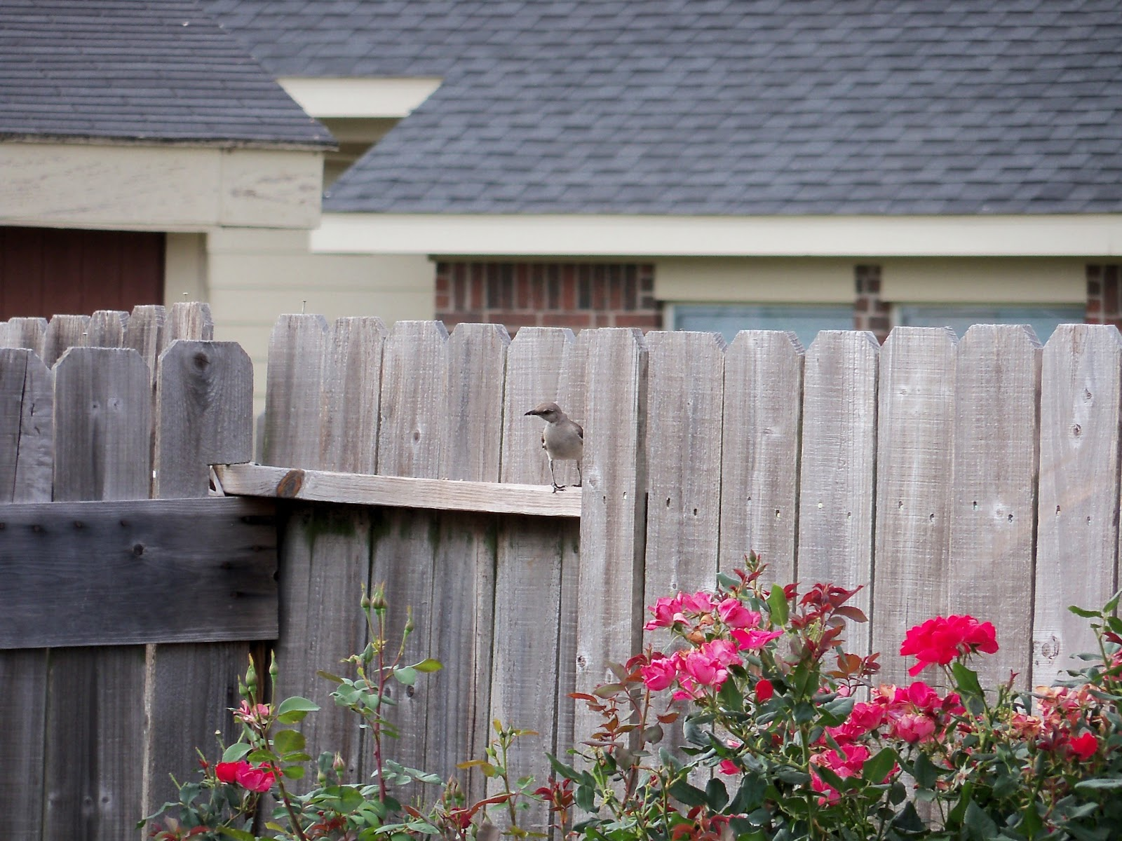 Gardening 2011 - 100_8952.JPG