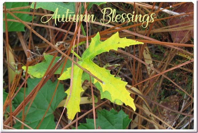 leafpostIMG_0587