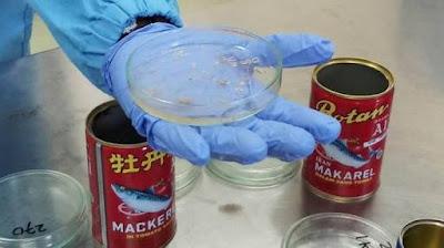 Cara Mengatasi Dampak Negatif Cacing Parasit Ikan Makarel