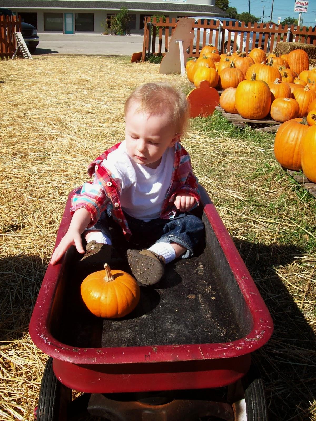 Pumpkin Patch - 114_6560.JPG