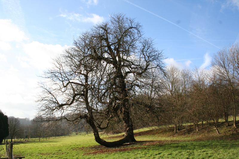 04 gatton wood tree near school